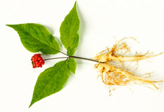 Gingeng Root - Mountain Maus Remedies