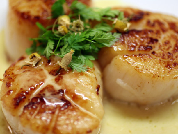 scallops.png