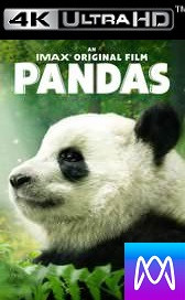 Pandas - HD4K/UHD - (Digital Code)