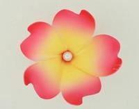 M foam D pink-yellow medium flower