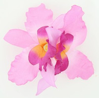M orchid L purple-D pink medium flower