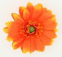 M daisy orange medium flower