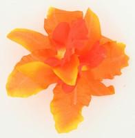M orchid orange medium flower