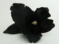 L orchid black big flower