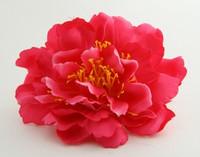 L botan D-pink big flower