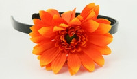 M daisy orange medium summer flower