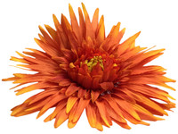 Orange daisy single hair flower clips