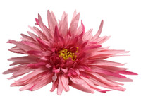 Pink daisy single hair flower clips
