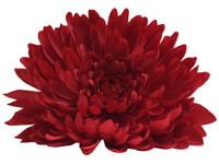 Red opium single hair flower clips