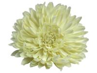 White opium single hair flower clips