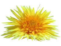 Yellow daisy single hair flower clips
