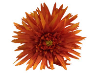 Orange daisy double hair flower clips