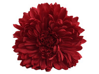 Red opium double hair flower clips