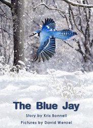 The Blue Jay - Level I/16
