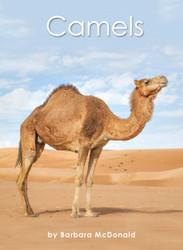 Camels - Level G/12