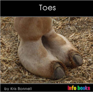 Toes - Level C/3