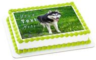 Husky Portrait - Edible Cake Topper OR Cupcake Topper, Decor