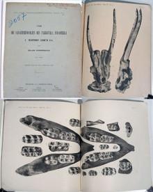 Rare Paleontology Book: Nordenskiold, Erland; Uber die Saugetierfossilien des Tarijatals, Sudamerika I. Mastodon Andium Cuv. 1903