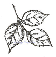 Birch Leaf Wood Mounted Rubber Stamp Northwoods Rubber Stamp New