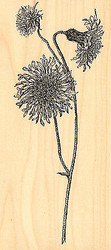Botanical Dandelion Wood Mounted Rubber Stamp Impression Obsession Alesa Baker