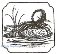 Bufflehead Duck in Frame Wood Mounted Rubber Stamp Northwoods Rubber Stamp New