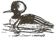 Bufflehead Duck Wood Mounted Rubber Stamp Northwoods Rubber Stamp New