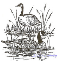 Canadian Geese Pair Birds On Pond Wood Mounted Rubber Stamp NORTHWOODS P620 New