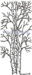 Cardinal Birds Birch Trees Wood Mounted Rubber Stamp Northwoods Rubber Stamp New