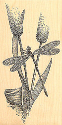 Dragonfly With Boat Damselfly Wood Mounted Rubber Stamp Impression Obsession NEW