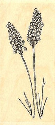 Grape Hyacinth, Wood Mounted Rubber Stamp IMPRESSION OBSESSION - NEW, C14407