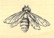 Honeybee, Wood Mounted Rubber Stamp IMPRESSION OBSESSION - NEW, A8859