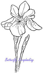 IRIS Blossom Flower Cling Unmounted Rubber Stamp MAGENTA C42209-P NEW
