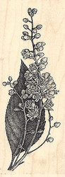 Japanese Clethra Wood Mounted Rubber Stamp IMPRESSION OBSESSION Flowers Leaf New