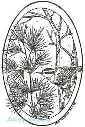 Pine Branch Nut Hatch Bird Wood Mounted Rubber Stamp Northwoods Stamp P8873 New