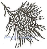 Single Pine Cone Branch, Wood Mounted Rubber Stamp NORTHWOODS - NEW, E1934