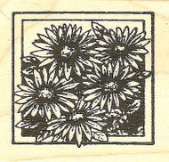 Wild Aster Square, Wood Mounted Rubber Stamp NORTHWOODS - NEW, CC9773