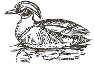 Wood Duck Wood Mounted Rubber Stamp Northwoods Rubber Stamp New
