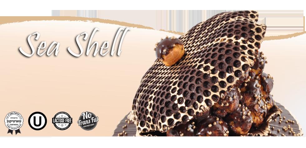 banner-seashell-2.png