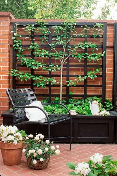 Black planter box with espalier fencing.