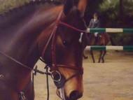 JACOB HUNT OIL EQUESTRIAN HORSE BURL WALNUT FRAMED GORGEOUS