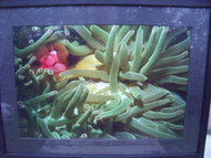 UNDERWATER PHOTO GREEN UNDERWATER LANDSCAPE SIPADAN BORNEO LONDON FRAMED PHOTO
