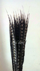 Natural - Lady Amherst Pheasant Feather 30 - 35 inch