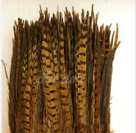 Natural - Ringneck Pheasant Feather 20-22 inch