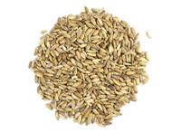 Milk Thistle Seed (Organic) - 1 oz.