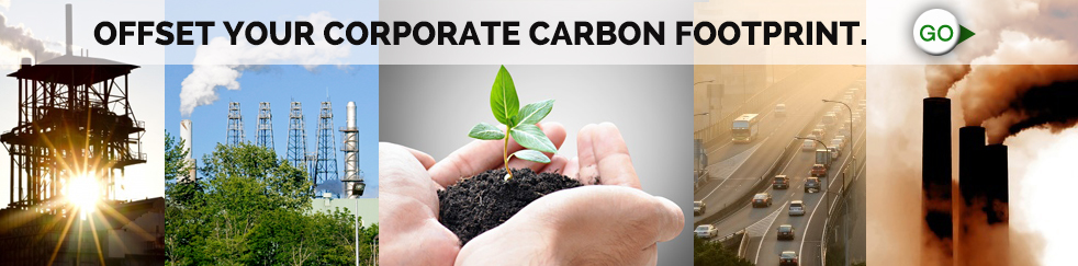plant a tree and offset your carbon footprint