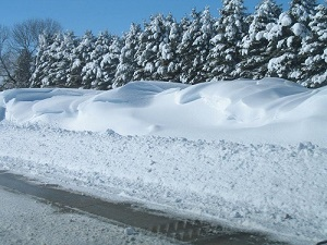 Living Snow Fence