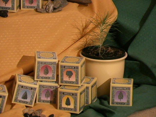 Tree growing kits