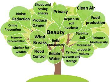 Essay help environment
