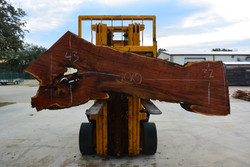 Mesquite  Live Edge Wood Slab - TM304 - 100x38x1.875 - Side 1