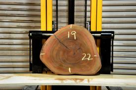 Araracanga Live Edge Wood Slab - OH19080 - 22x19x2